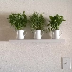 My little herb garden